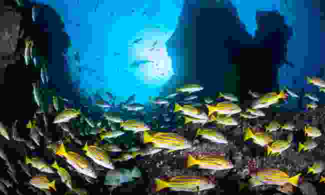Underwater in Costa Rica (Dreamstime)