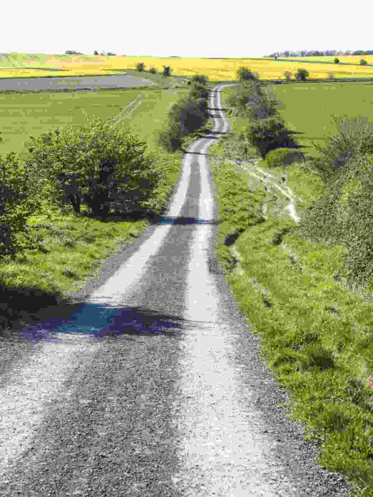 Old country lane in Wiltshire (Jack Thurston)