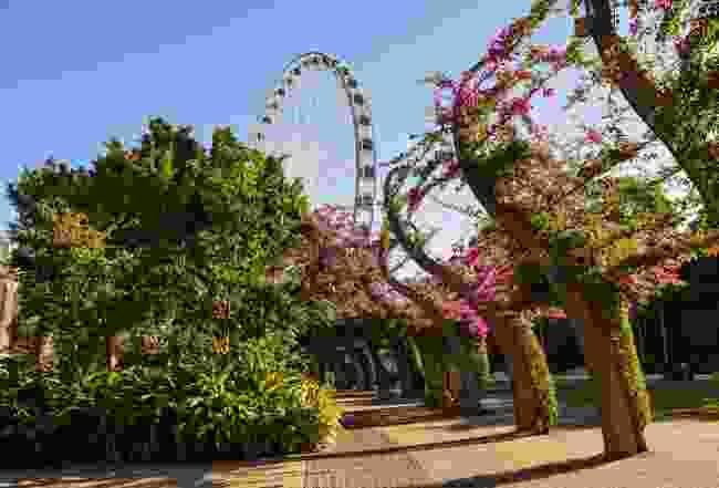 The Wheel of Brisbane (Shutterstock)