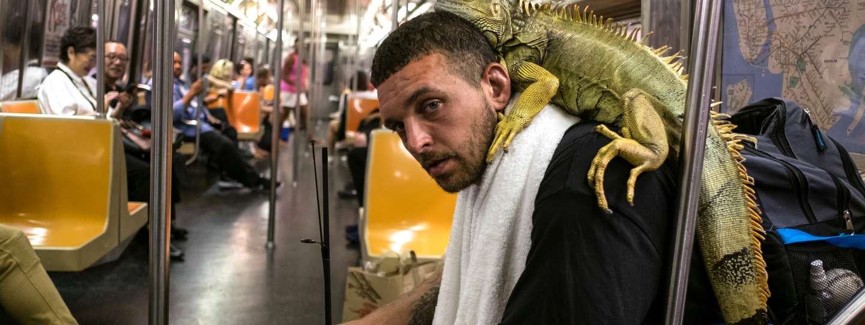 Man and iguana on the G Train in Brooklyn (Richard Koek)