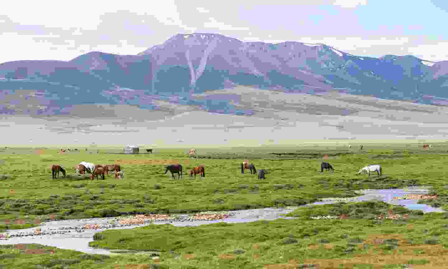 Alpine meadow in the Tian Shan Mountains (Dreamstime)
