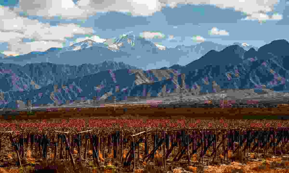 Vineyard backed by Aconcagua volcano (Dreamstime)