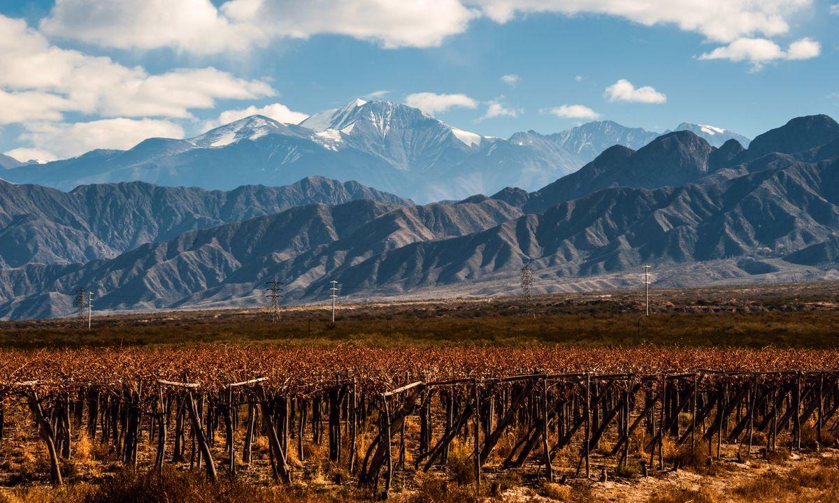Vineyard backed by Aconcagua volcano (Dreamstime)