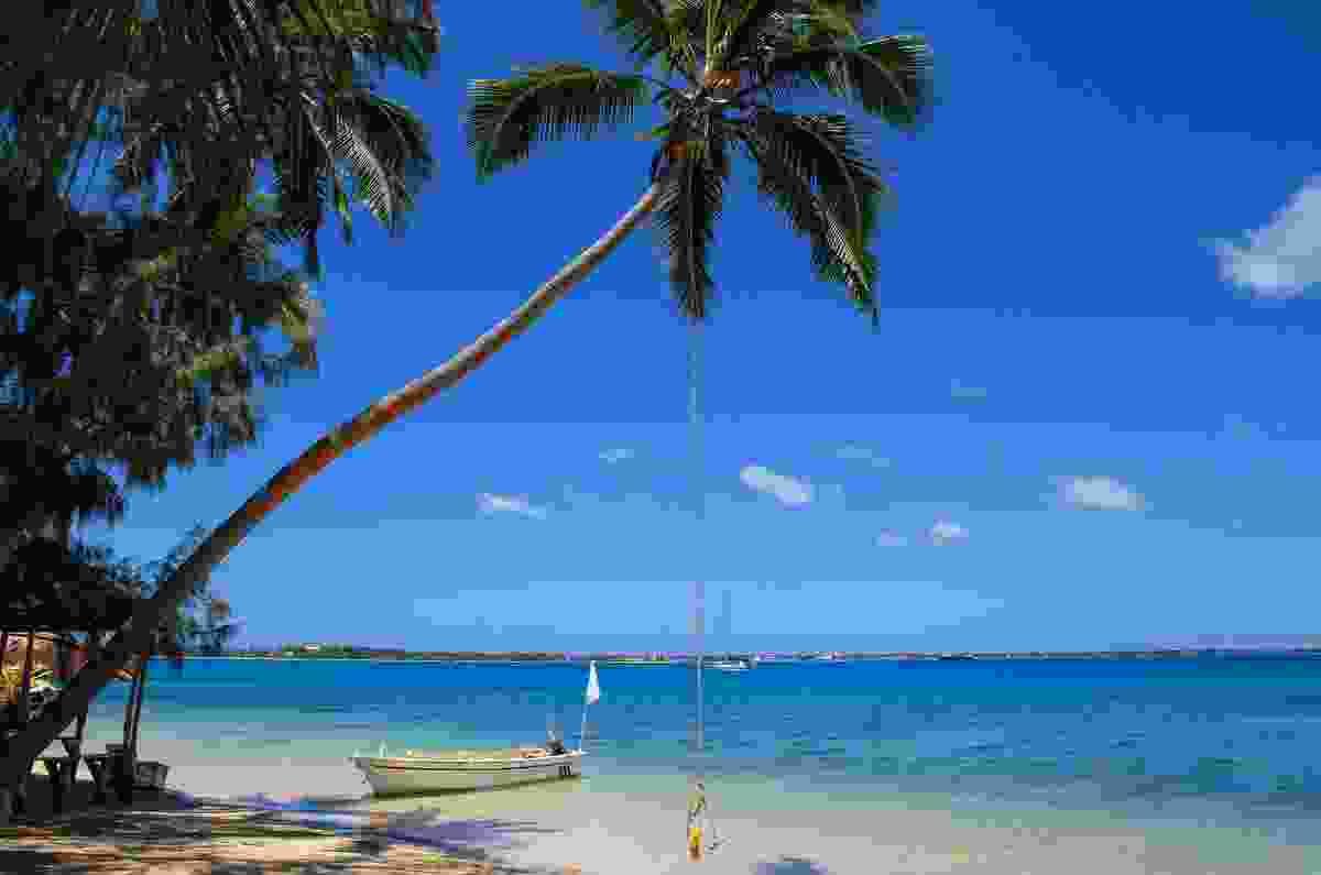 Palm tree with rope swing at Pangaimotu island (Dreamstime)
