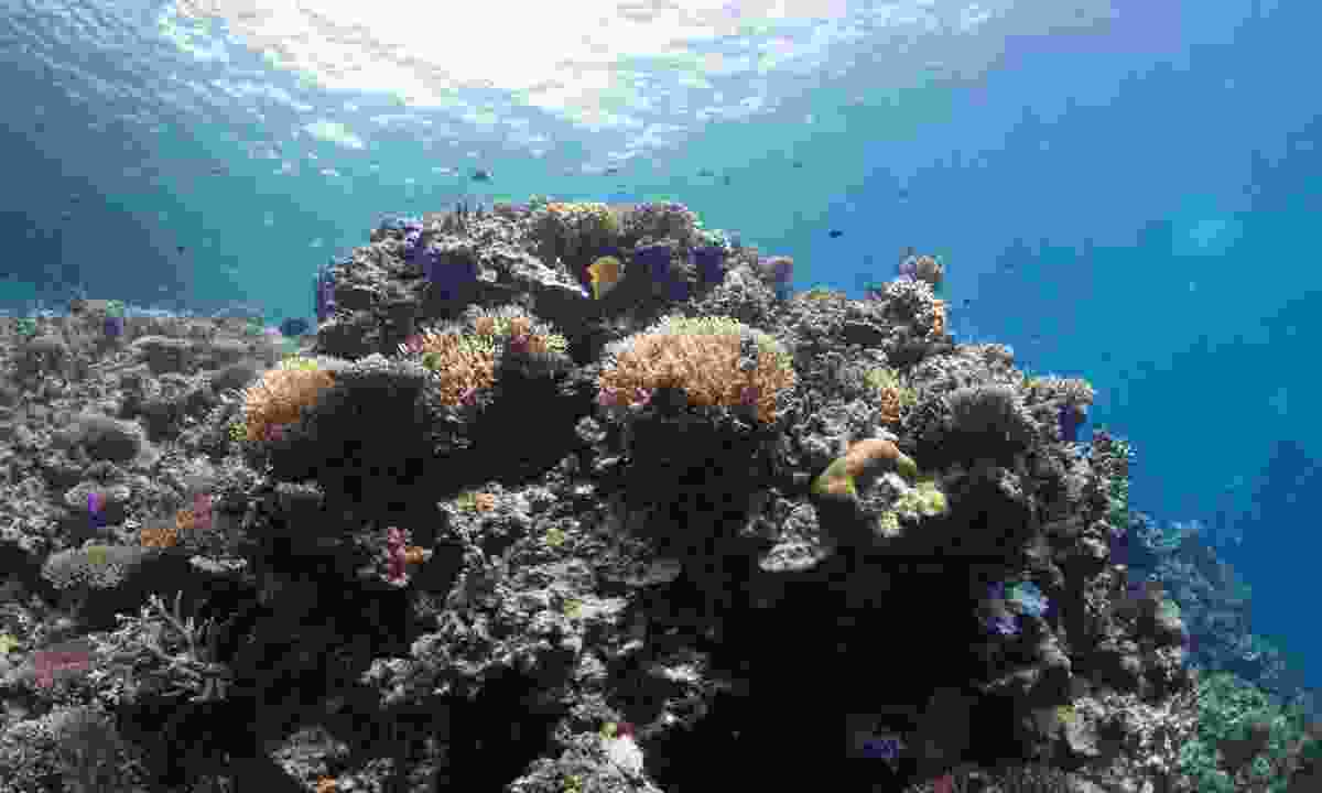 Otto's Reef in Walindi (Dive Worldwide)