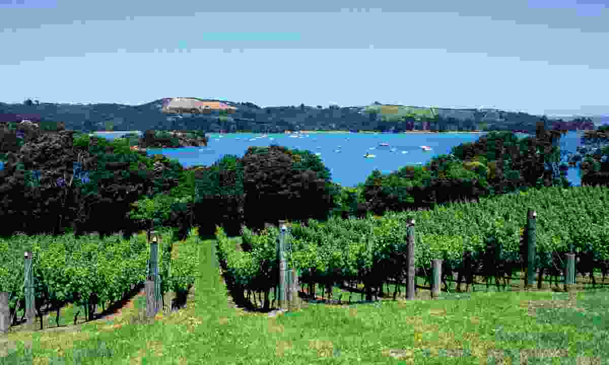 Vineyards on Waiheke Island (Dreamstime)