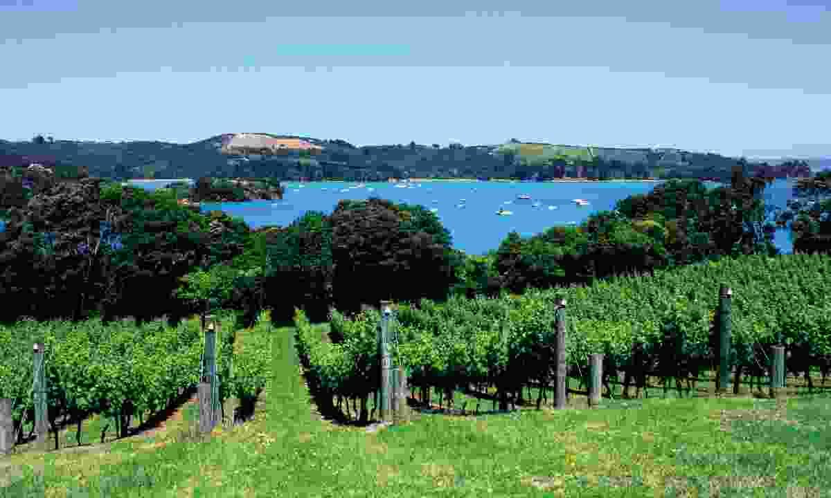 Vineyards on Waiheke Island (Dreamstime)