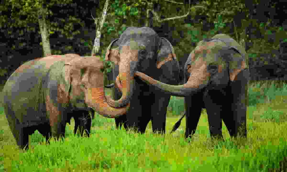 Elephants are free to roam (Elephant Hills)