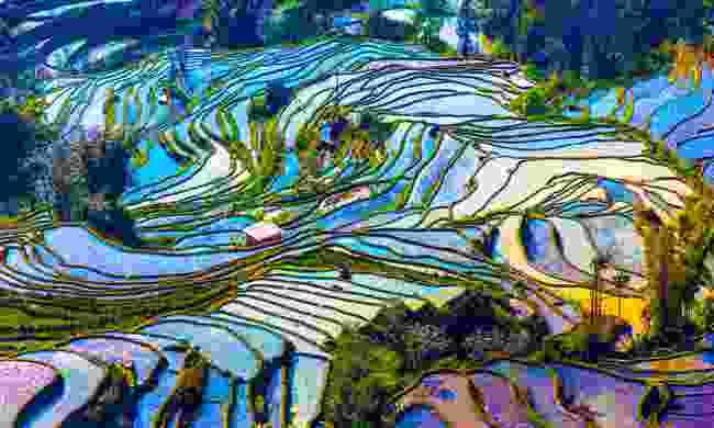 Yuanyang Rice Terraces (Shutterstock)