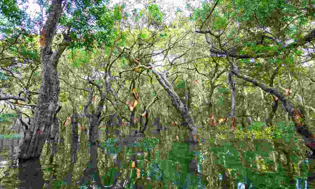 Visit the floating forest (Shutterstock)