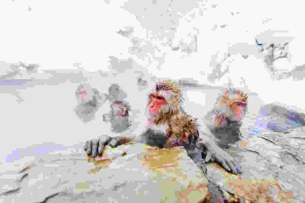Snow monkeys in the onsens near Nagano, Japan (Shutterstock)