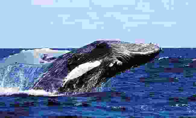Watch whales in the Azores (Futurismo Azores Adventure)
