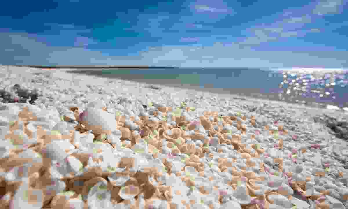 Shell Beach, Western Australia (Shutterstock)