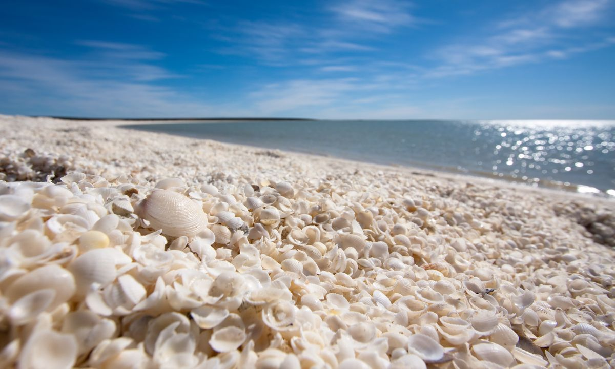 the world s 7 best beaches for finding shells wanderlust