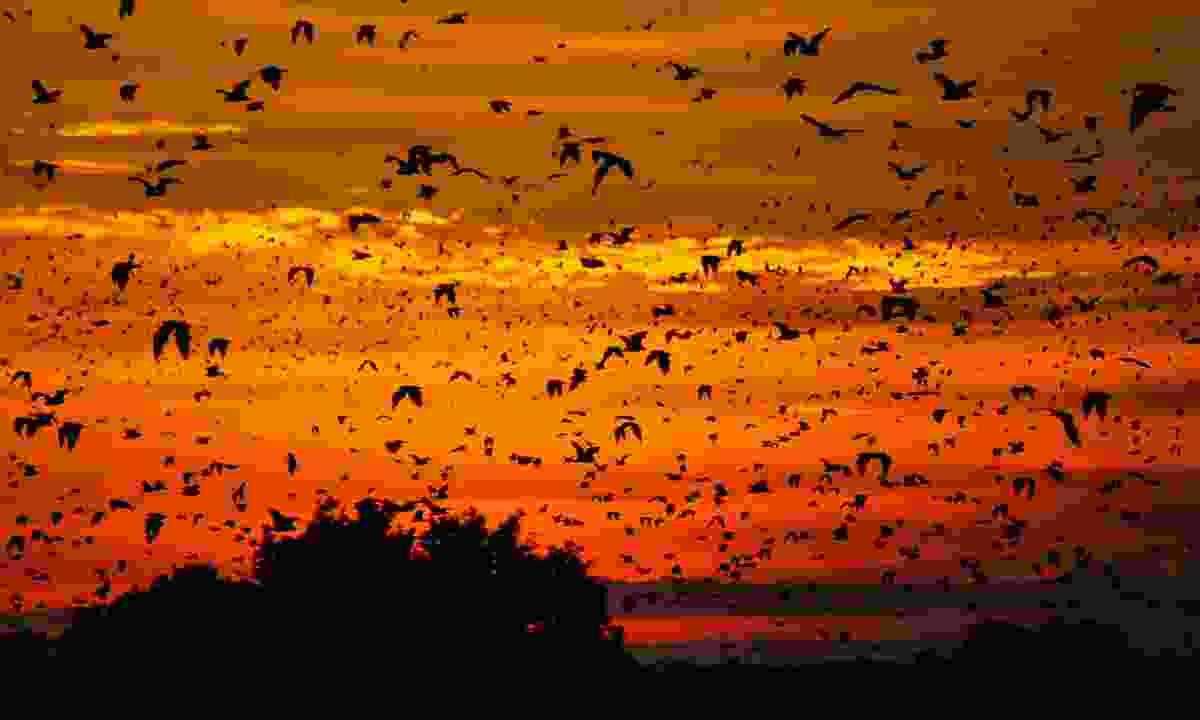 Sunset at Kasanka National Park (Dreamstime)