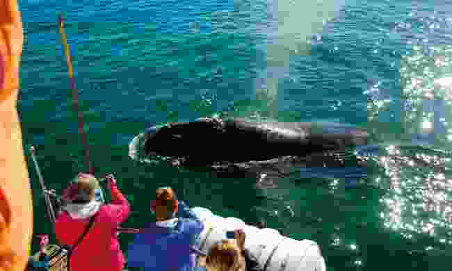 Watch whales in South Africa (Fleewinter)