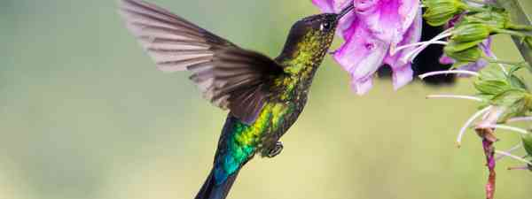 What wildlife you will see in Costa Rica