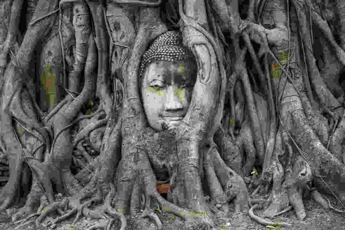 The head of a sandstone Buddha is overgrown by a banyan tree in Ayutthaya (Sanghamitra Sarkar)