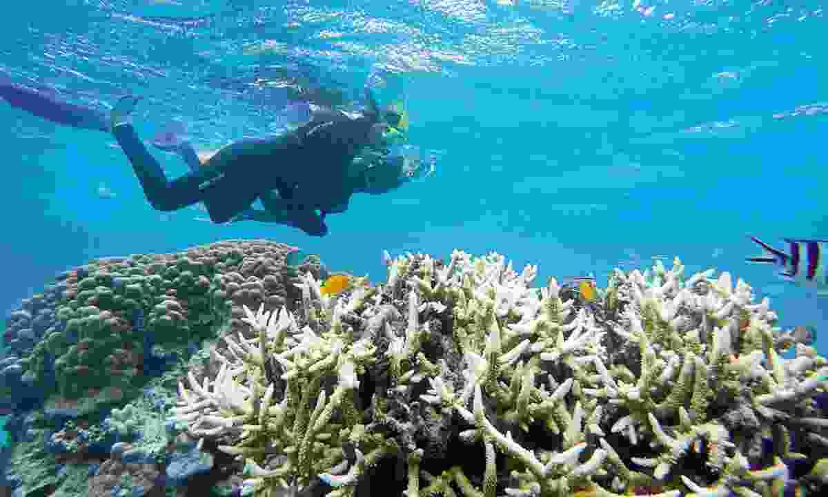 Diving in Agincourt Reef (William Gray)