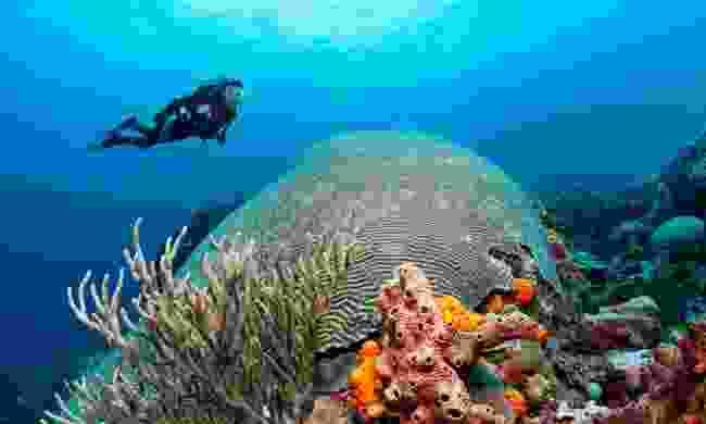 See a giant brain coral (Tobago Tourism Agency Ltd)