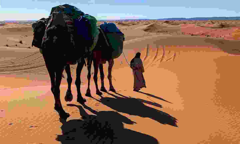 Walking across the Sahara (Alice Morrison)