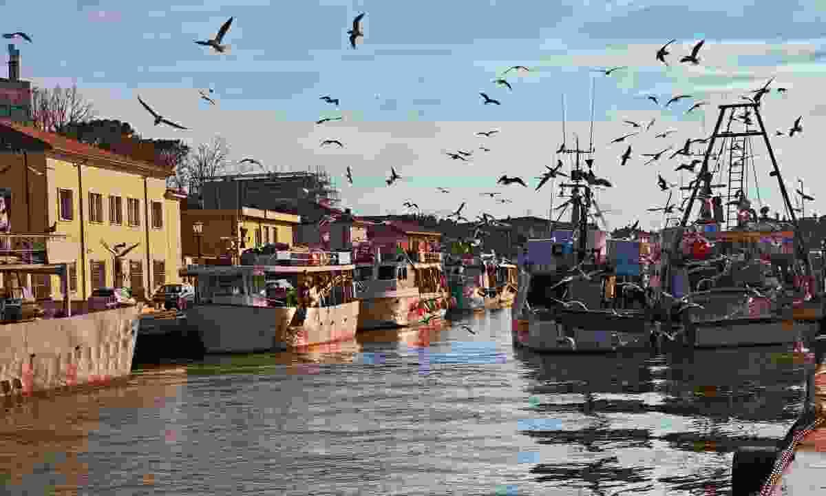 Fishing boats in Cesenatico (Dreamstime)