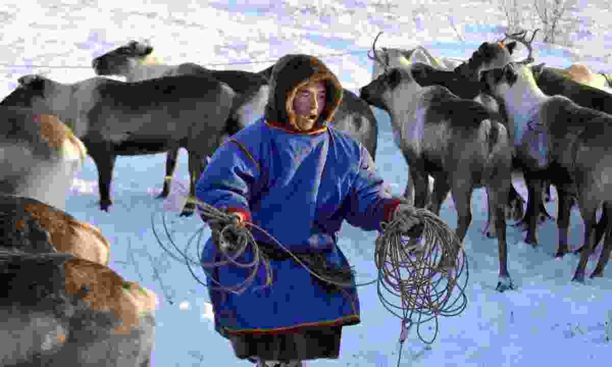 Herding reindeer on the Yamal Peninsula (Dreamstime)