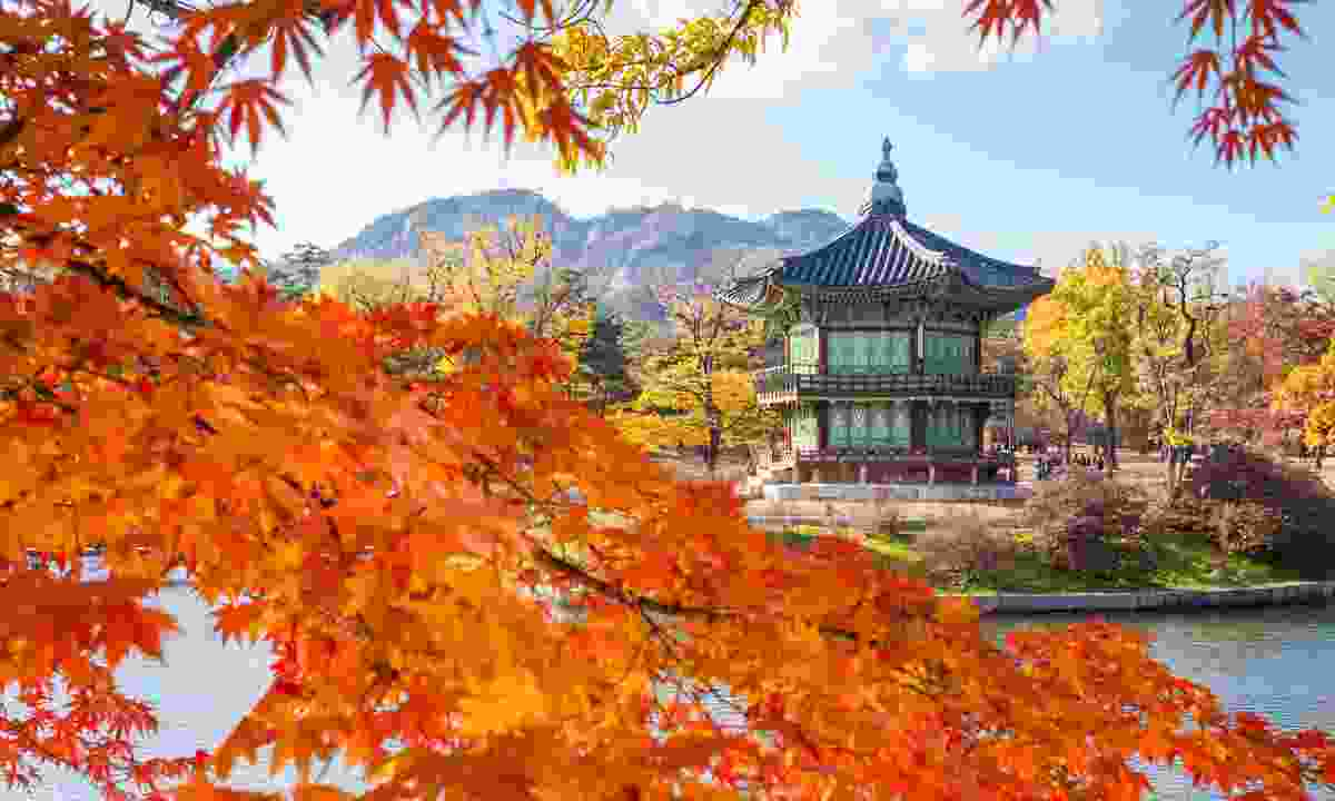 Gyeongbokgung palace in autumn (Dreamstime)