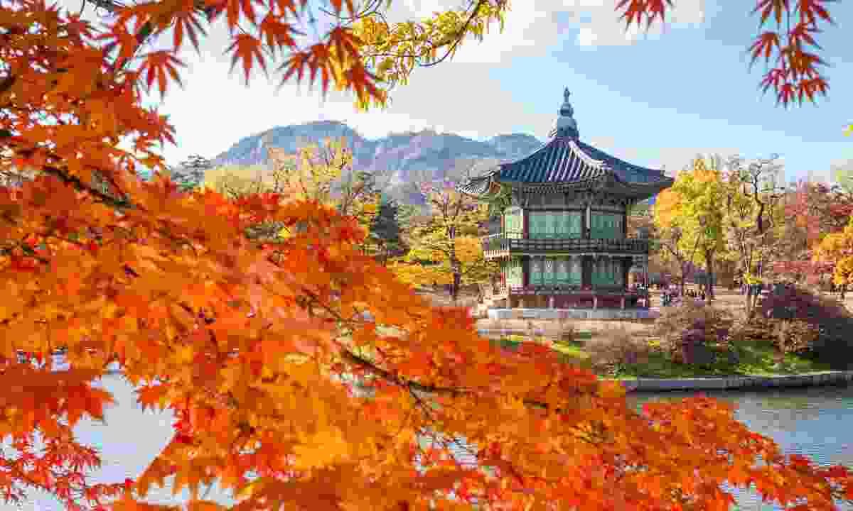 Gyeongbokgung palace in autumn (Dreamstime)