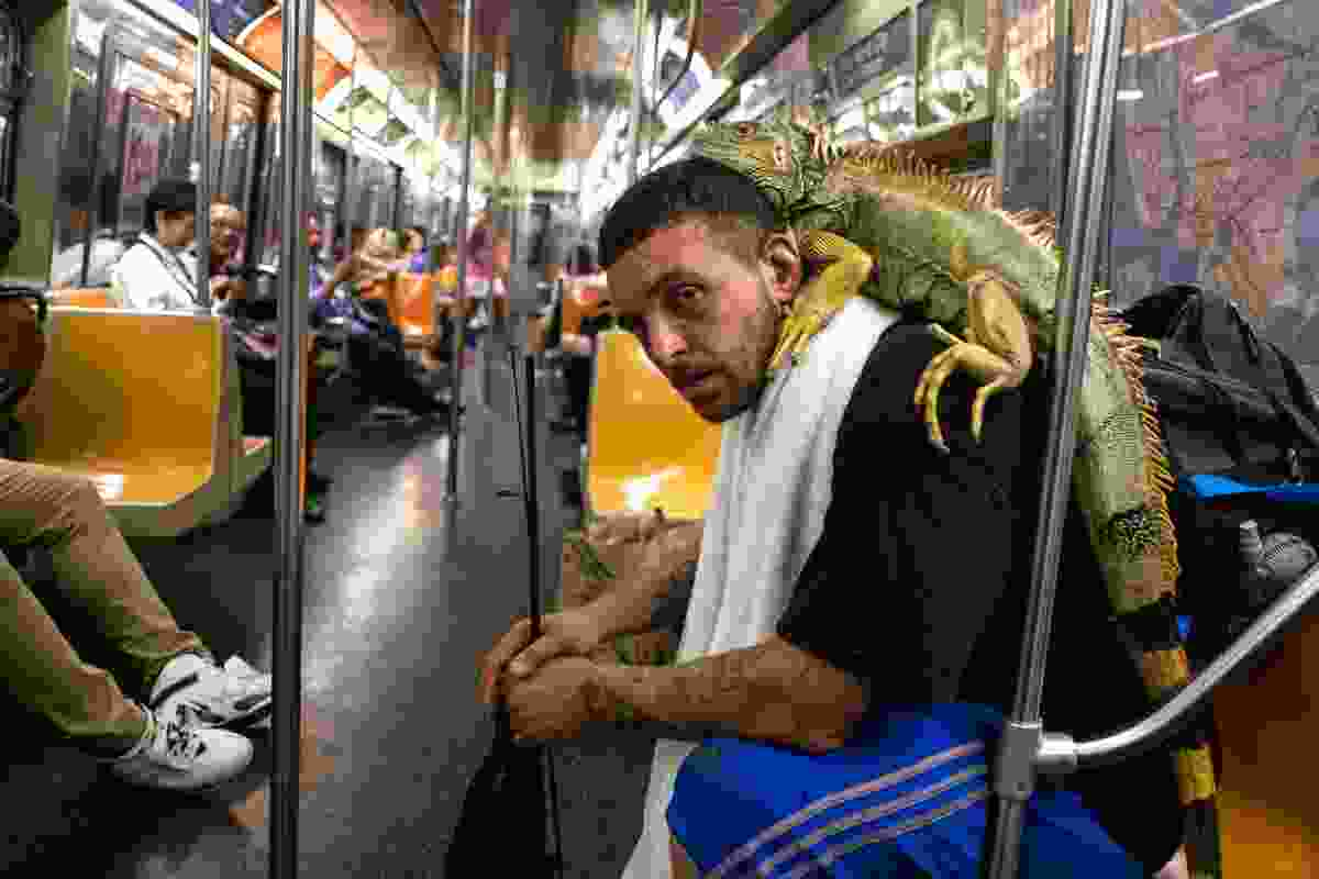 Man with his iguana on the G Train, Brooklyn (Richard Koek)