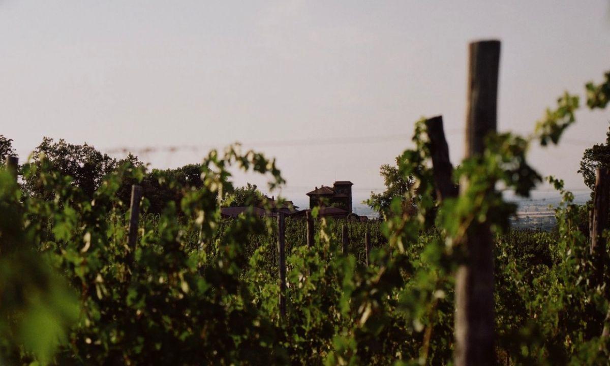 The vineyard at La Stoppa (lastoppa.it)