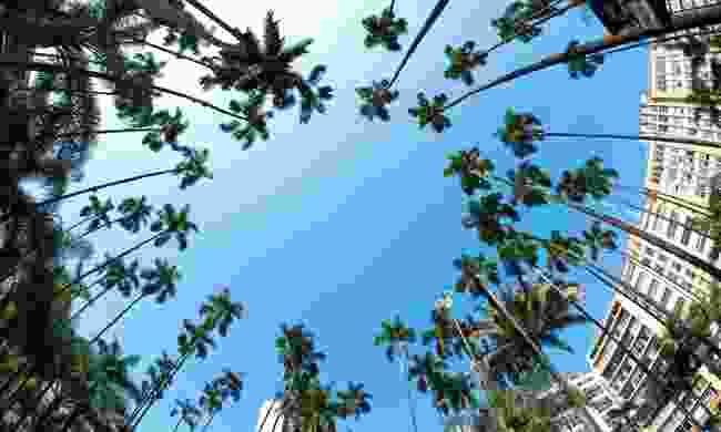 The palm trees of Plaza de Caicedo (Shuttertsock)