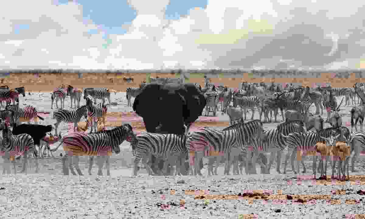A busy waterhole in Etosha national Park (Shutterstock)