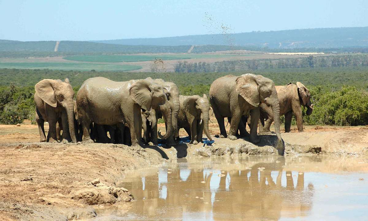 Addo Elephant National Park (Dreamstime)