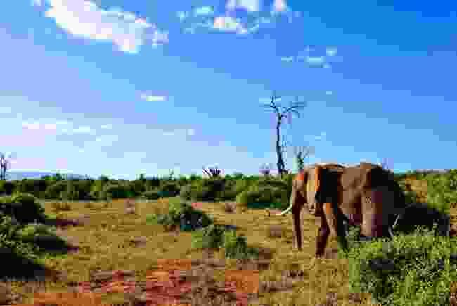 An elephant in Kenya (Dreamstime)
