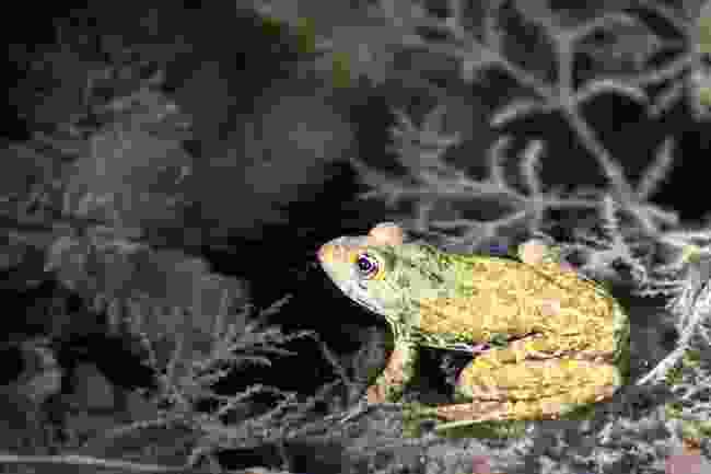 One of the many species living in Krka National Park, Croatia (Dreamstime)