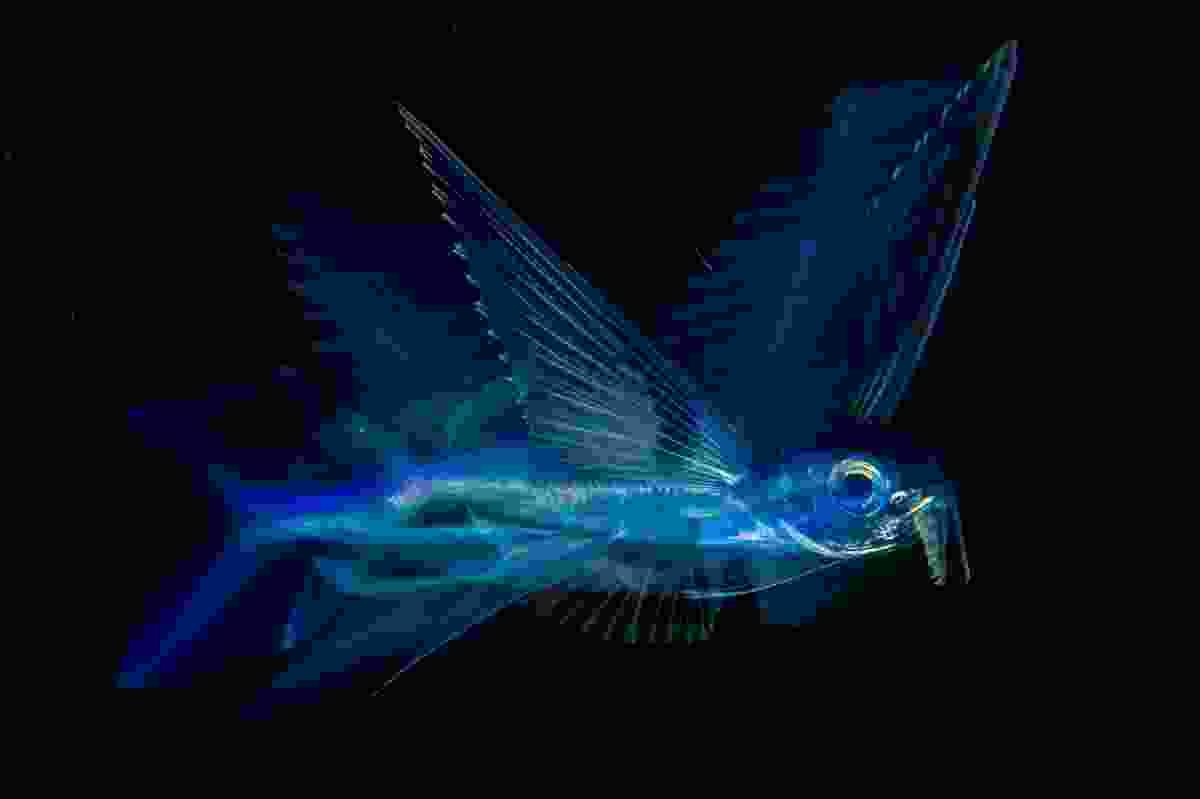 Winner of Under Water category: 'Night flight' (Michael Patrick O'Neill, USA)