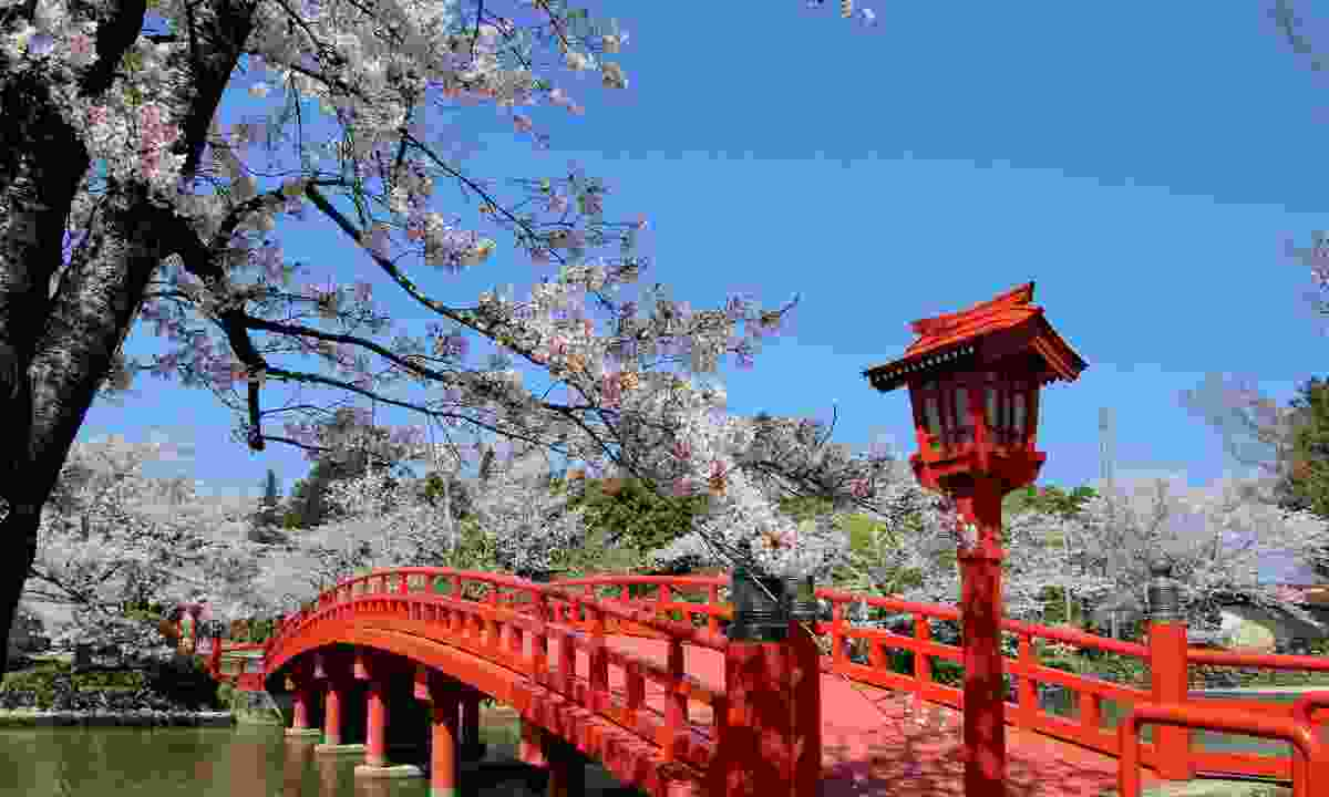 The Tsurugaoka Hachiman-gu shrine in Spring (Shutterstock)