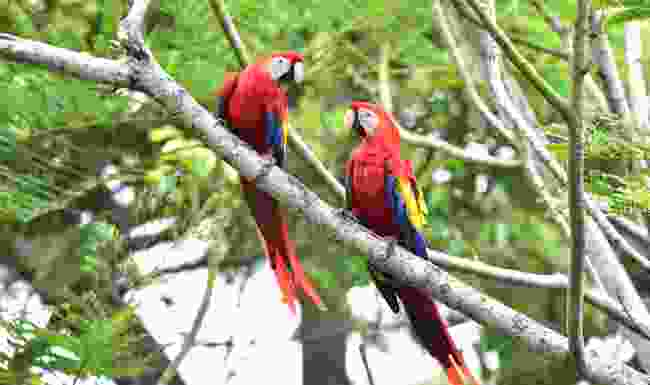 Go birdwatching in Panama, without leaving your house (Shutterstock)