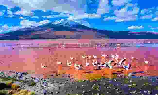 Flamingos in Laguna Colorada, Bolivia (Shutterstock)