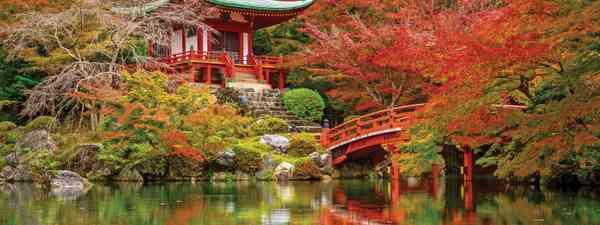 Maple trees surrounding Kyoto's Daigo-ji Temple (Shutterstock)