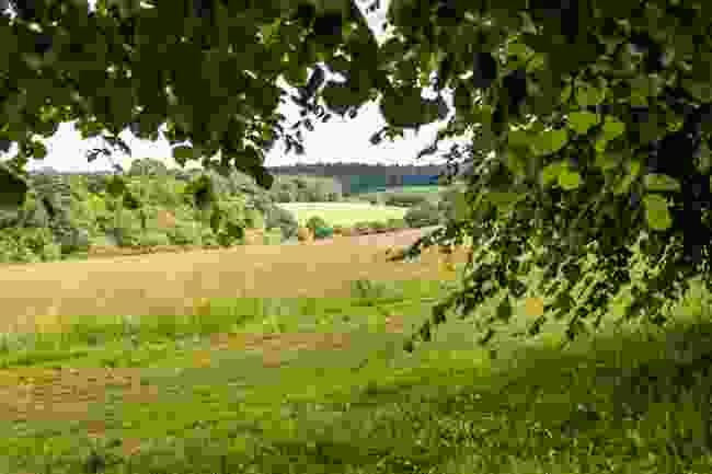 Trent Country Park (Shutterstock)