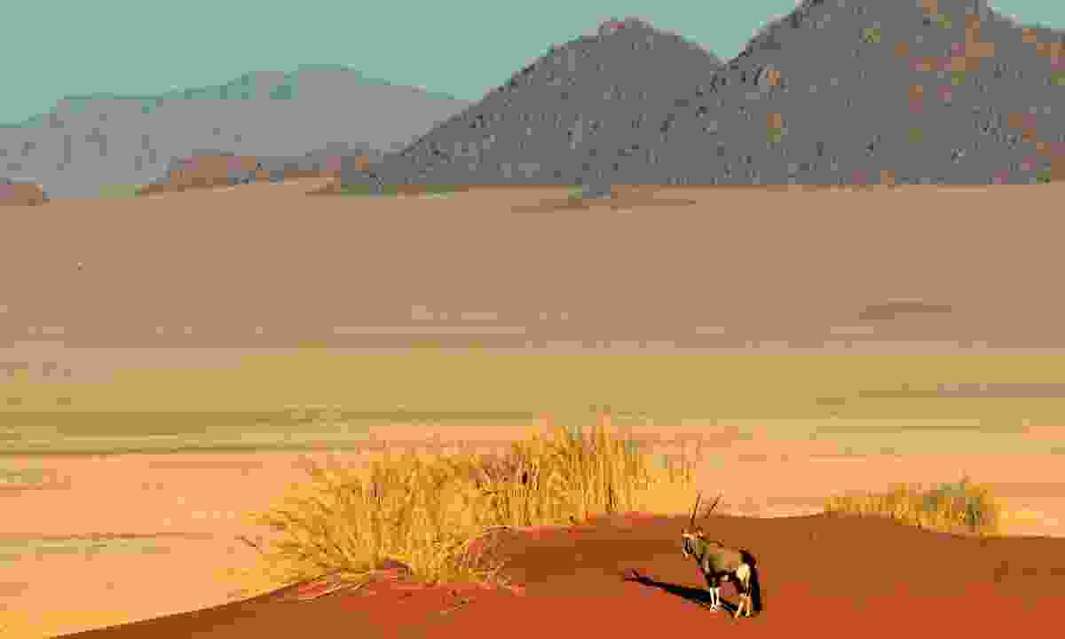 Vast desert in Namibia (Dreamstime)