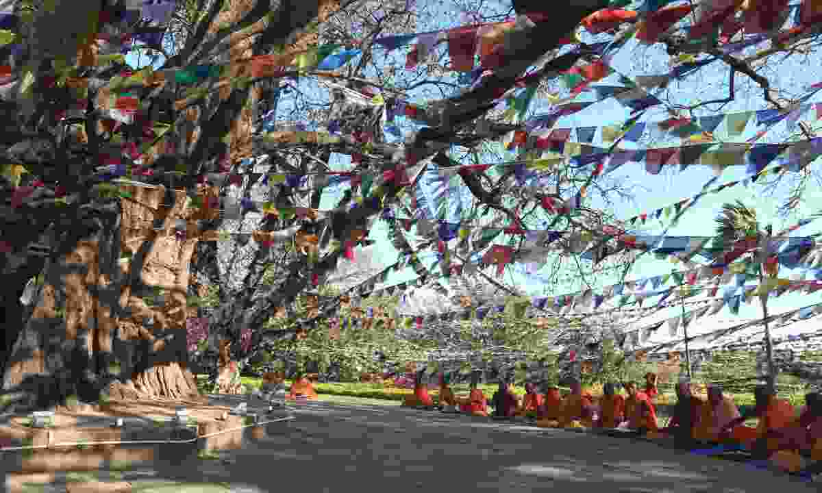 Monks praying at the Bodhi tree (Dreamstime)