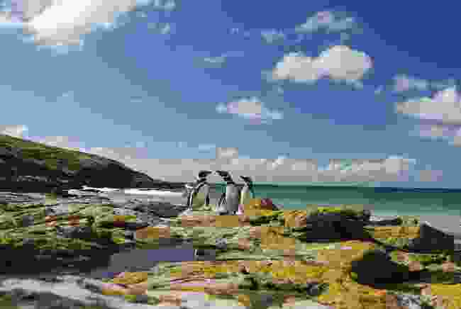 The Falkland Islands (Dreamstime)