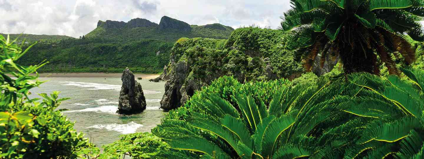 Jungle shrubbery on the coast of Okinawa (Dreamstime)