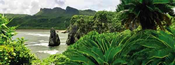 Jungle shrubbery on the coast of Okinawa (Dreamstime)