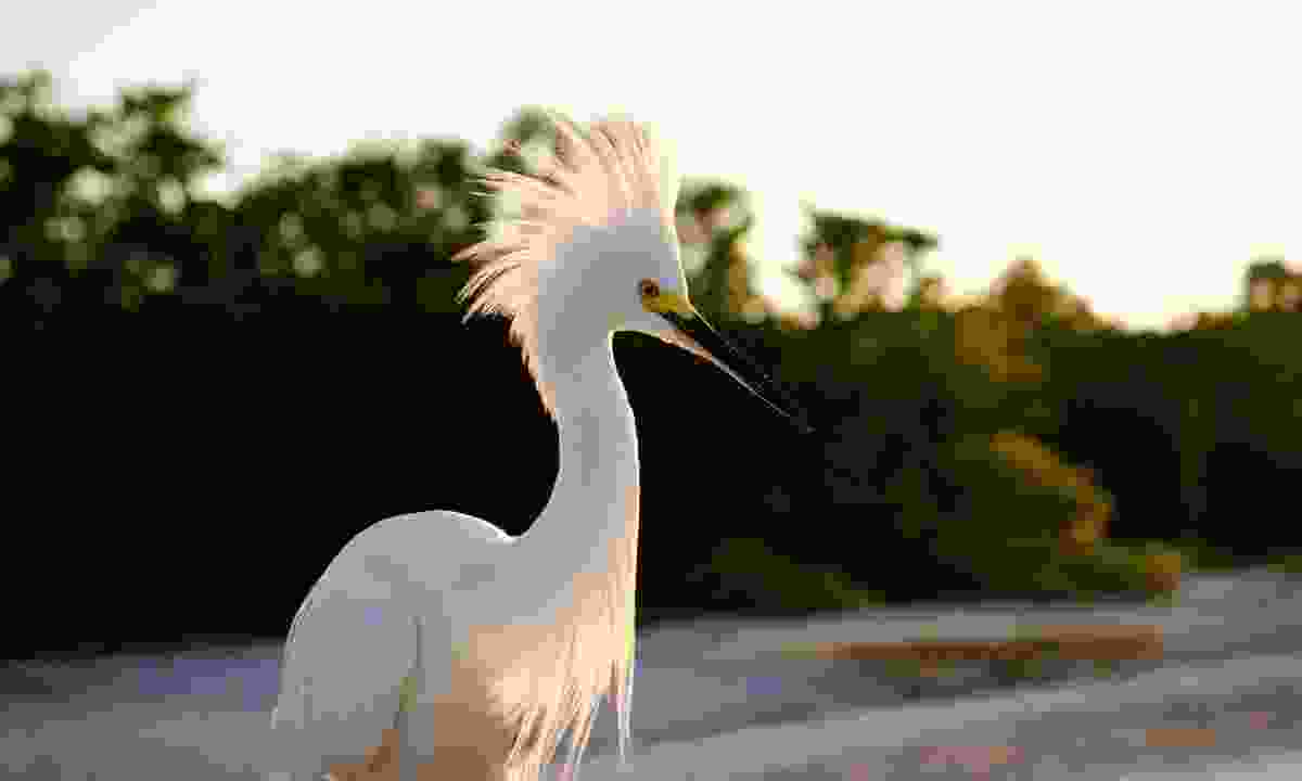 Look out for wading birds such as egrets