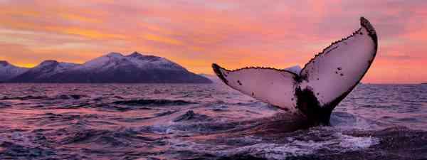 Win! A Norwegian sailing safari with Wildfoot