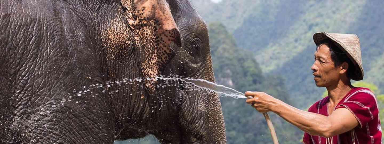 Bathing an elephant in Thailand (Elephant Hills)